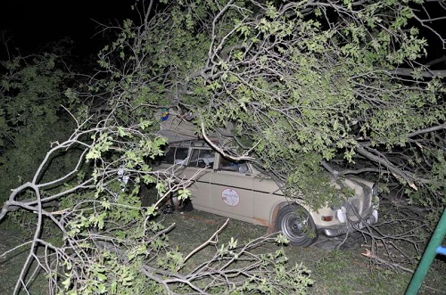 A tree decided to try it's luck on the 122 wagon - tree 0 Volvo 1.